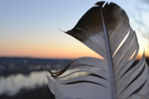 Sunset Feather wave