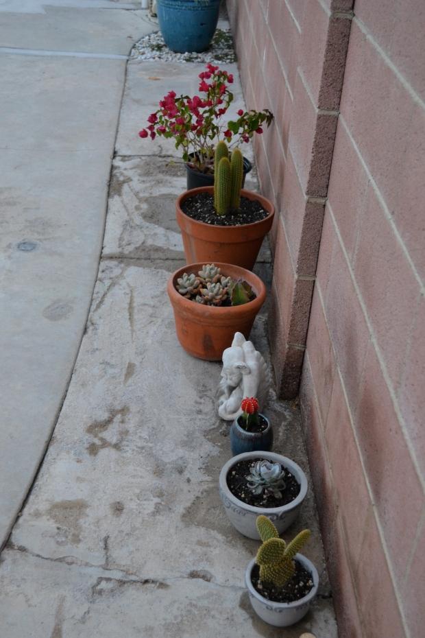 Planted my Dad a cactus garden