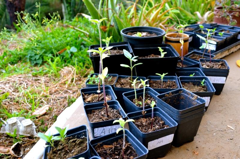 sproutin