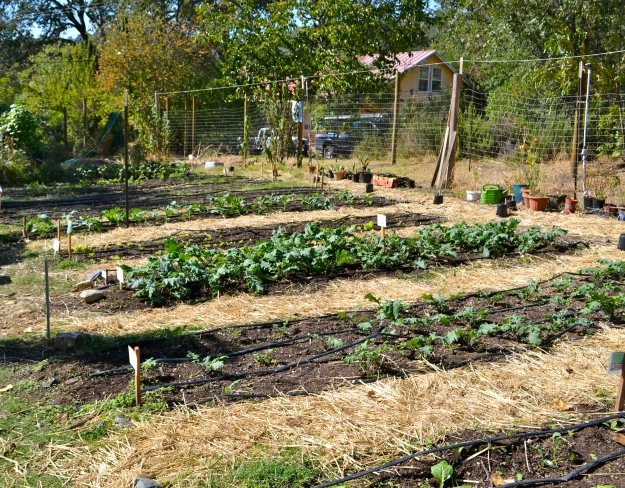 Big organic garden that we could pick fresh veggies from to add to our meals!